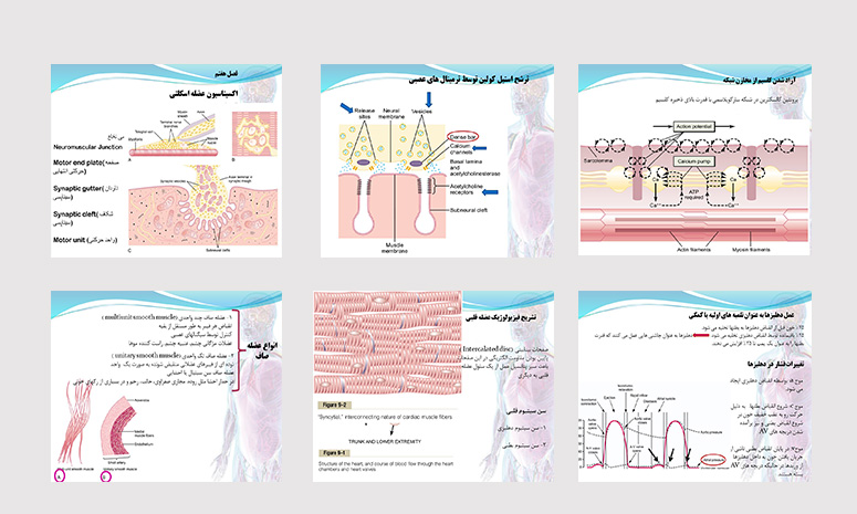 پاورپونیت-عضلات-صاف-اسکلتی-و-قلبی-فیزیولوژِی-گایتون